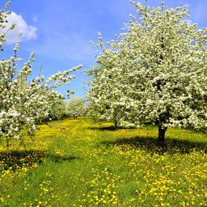 la saison du printemps
